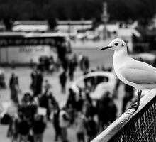 Perched Seagull in Paris, France by Olivier Sohn