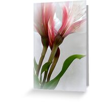 Stemming From Music; Alstroemeria Greeting Card