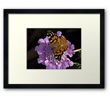 Meadow Argus Butterfly on a Granny's Pincushion Framed Print