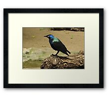 shiny bird Framed Print