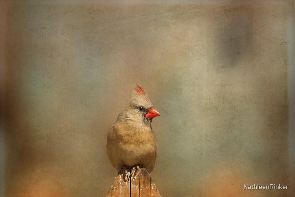 Lady Cardinal by KathleenRinker