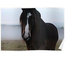 Horse. October evening. Norway. Poster