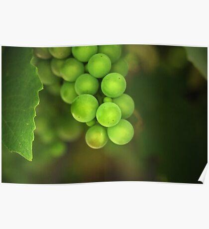 Grapes Poster