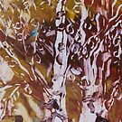 birches in autumn by Claudia Smaletz