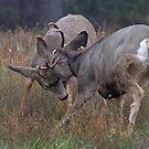 Deer Fight (2) by JamesA1