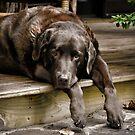 Paws off the Porch by Karen Peron