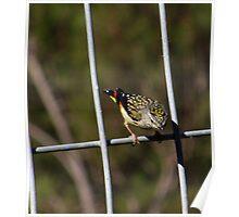 Pretty Little Bird.. Poster