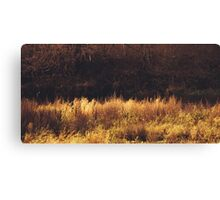 autumn mood Canvas Print