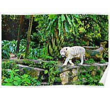 White Tigerrr Poster