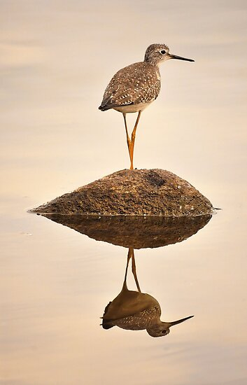 Upland Sandpiper by Poete100