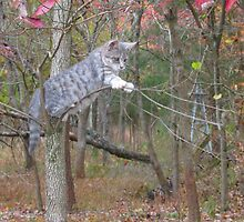 Out On A Limb by Ginny York