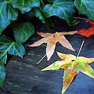 Autumn Garden 1 by Ellen Cotton