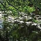 The Pond by ArtOfE
