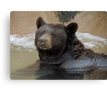Bathing Black Bear Canvas Print