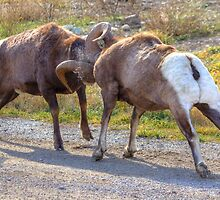 Ram Battle (2) by JamesA1