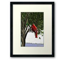Cardinal In The Alabama Winter Framed Print