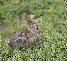 Rabbit by Jennifer Totten