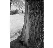Tree Closeup2 Photographic Print