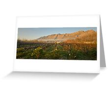 Montagu vineyard Greeting Card