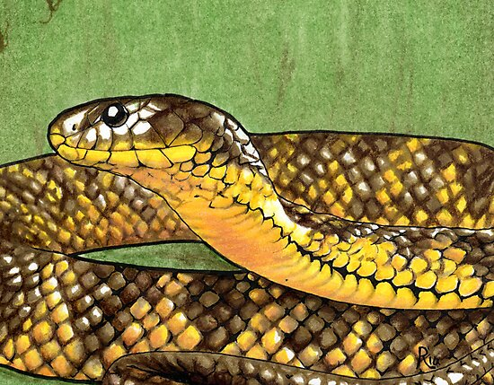 Snake in the Grass by ria gilham