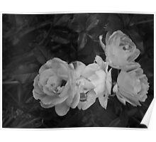 Monocrome Rose Poster