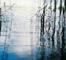 Shattered Reeds by EarthandSky