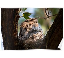 Curious Frogmouth Chick Poster