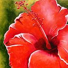 Hibiscus by Picatso