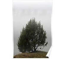3.11.2013: Juniper Tree I Poster