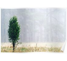 3.11.2013: Juniper Tree III Poster
