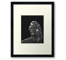 Interrupted Nap - Mexican spotted owl Framed Print