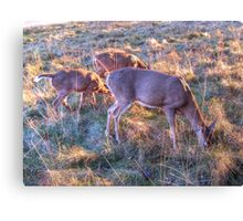 Keeping Up With Mother Canvas Print