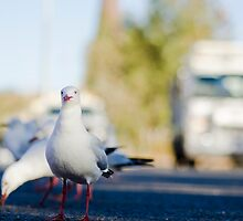 Seagull  by oddoutlet