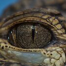 Gator Eyeball by starbucksgirl26