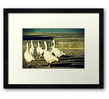 Goose Clan Framed Print