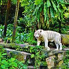 White Tiger by Fike2308