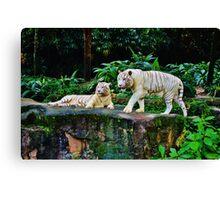 White Tigers Canvas Print