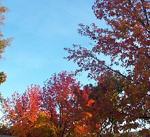 Saratoga in Fall I by PockySamurai