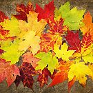 Layered In Leaves by Kathilee