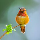 Humming bird Nov. by j Kirk Photography                      Kirk Friederich