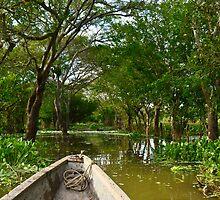 El Magdalena (Manglares/Mangrove swamps) II by Camila Bruce Photography