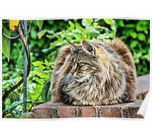 Fluffy Kitty Poster