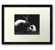Playing With Food Framed Print