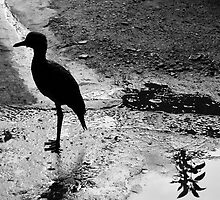El Magdalena (Ave/Bird) BW by Camila Currea G.
