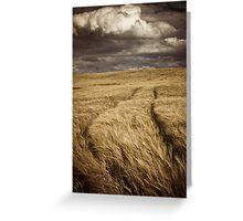 Barley Crop Greeting Card