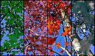 Four Seasons by Jessica Liatys