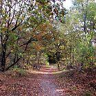 Autumn Forest by ienemien