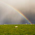 Rainbow ~ Sheep by M.S. Photography/Art