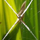 Spider at Center by Dhaval Shah