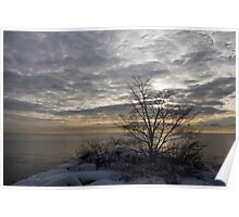 Early Morning Tree Silhouette on Silver Sky Poster